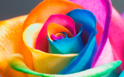 Pomen barve cvetja
